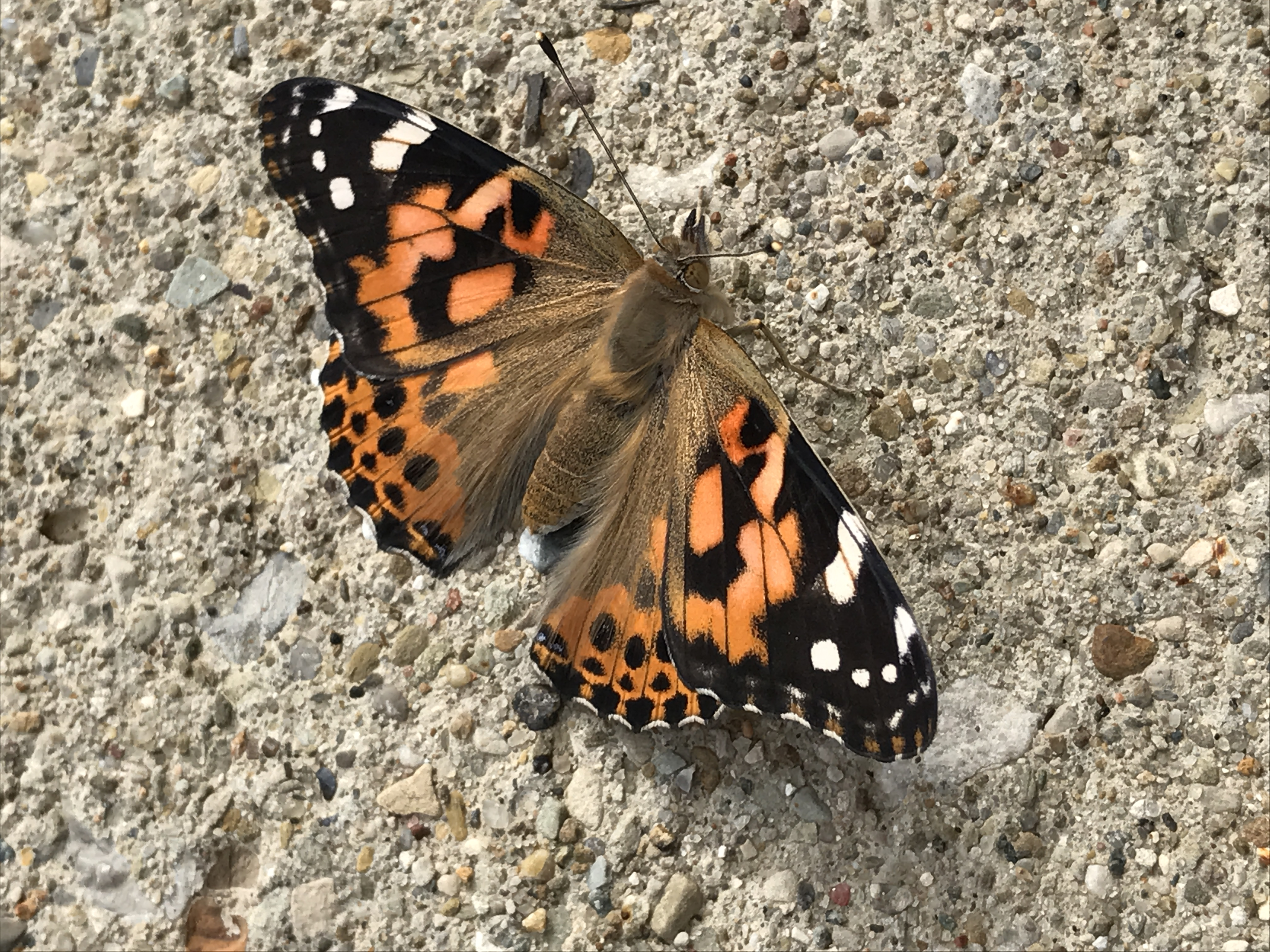 Lessons from the Butterfly